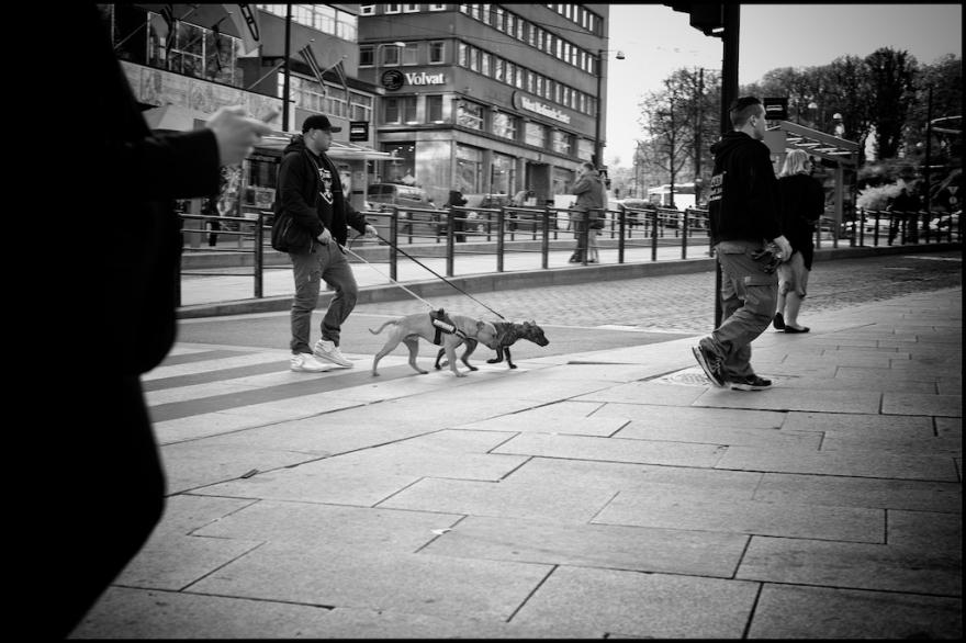 Walking the Dogs II